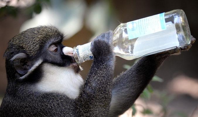 Животные-пьяницы