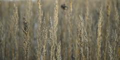 Полынь — трава 2014 года