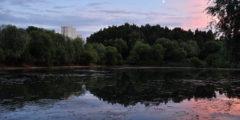 Чудеса обыкновенного парка