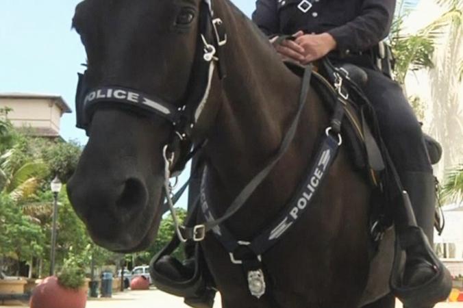 Полицейский конь Панчито стал достопримечательностью одного из районов Майами