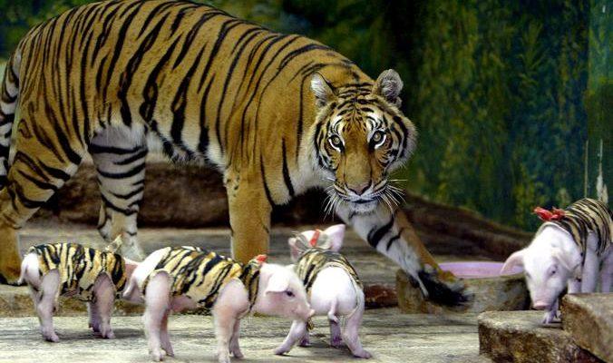 Шесть самых оригинальных пар животных