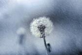 Фото: rain and snow/flickr.com