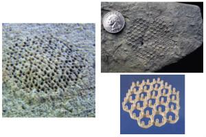 Фото норок, сделанных Paleodictyon Nodosum, существом, которое учёные ни разу не видели. Фото: Wikimedia Common