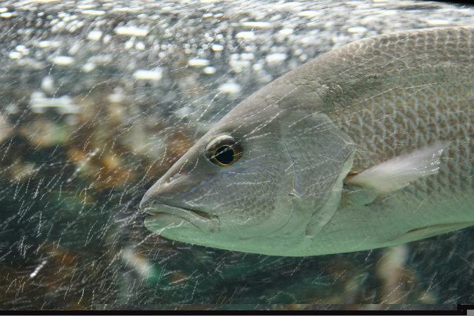 Вода, рыба, физика