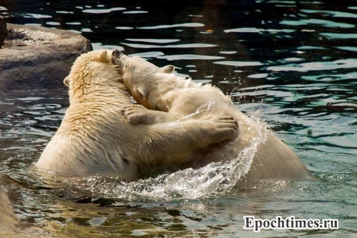 новости Москвы, московкий зоопарк, страхование