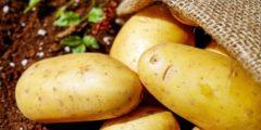 Картофель: 10 интересных фактов