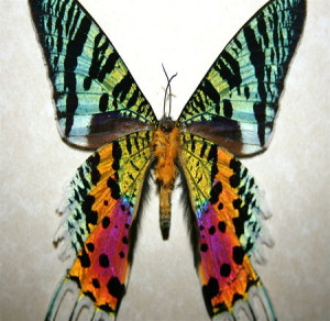rsz_sunset_moth