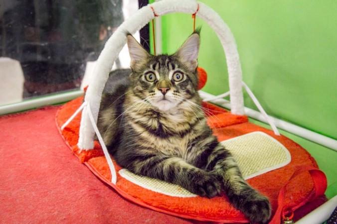 Любимая кошка на выставке кошек в Рязане. Фото: epochtimes.ru
