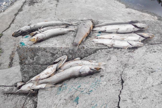 экология, рыба, Гурьевка