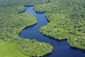 Леса Амазонии.  Фото: CIAT/flickr.com