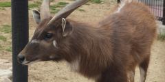 В аэропорту ЮАР убили 8 антилоп из чешского зоопарка