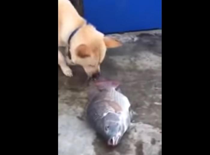 Собака спасает рыб. Фото: скриншот/visiontimes.com