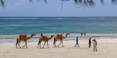 В Кении пройдут верблюжьи скачки