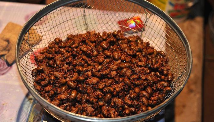 Фермеры зарабатывают на ловле цикад для ресторанов