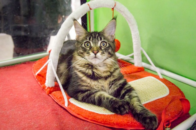 Интернет магазин для кошек. Фото: Сергей Лучезарный/epochtimes.ru