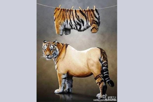 Фотография остриженного тигра распространилась в китайском Интернете. Так пользователи сети отметили день рождения Цзян Цзэминя, бывшего лидера коммунистической партии Китая. Фото: freeweibo.com