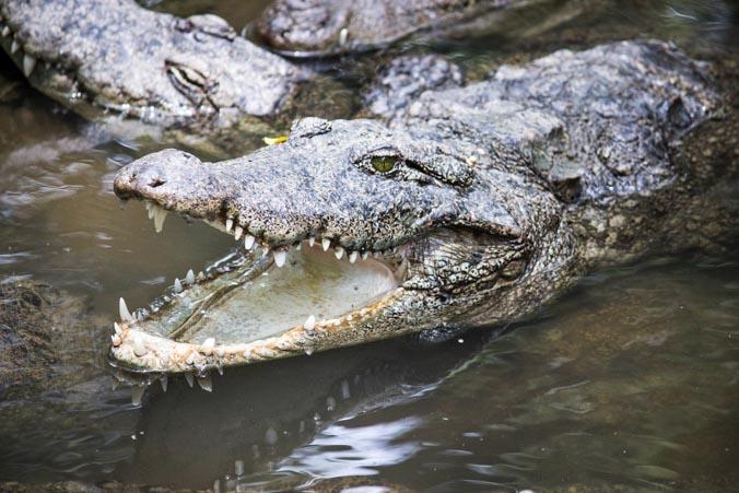 Пользователей озадачил огромный осётр в центре Ялты и затопленный крокодиляриум (Видео)