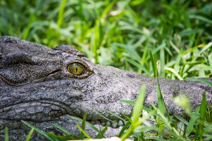 Крокодилы. Фото: Татьяна Виноградова/Великая Эпоха