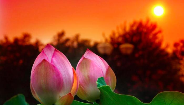 Самые божественные цветы на Земле