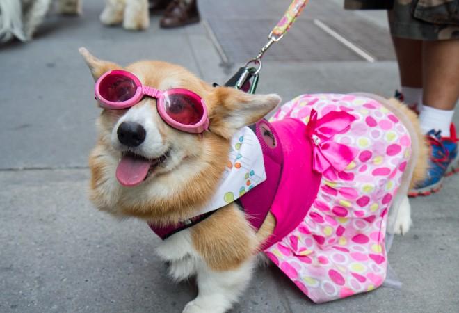 собаки, животные, фото дня, фото