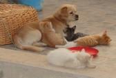 суицид, СКР, кошка, собака
