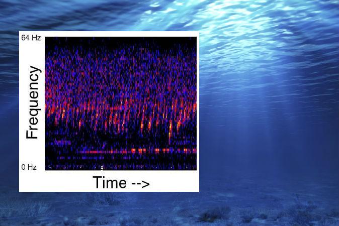 Воды  Тихого океана на всей его протяжённости пронизывает необъяснимый звук.  Фото: NOAA; background image via Thinkstock
