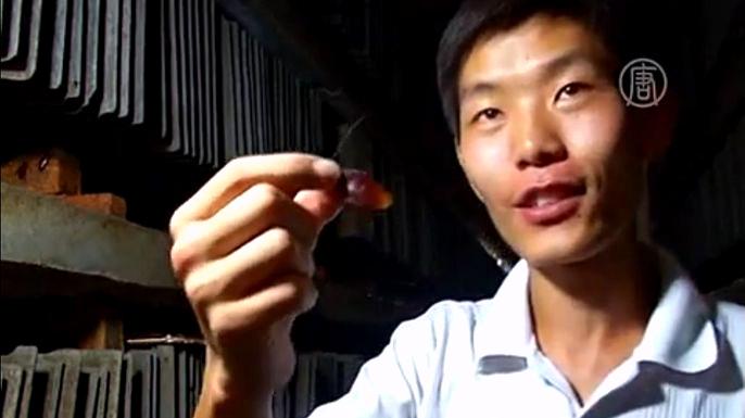 Китаец открыл тараканью ферму. Скриншот видео.