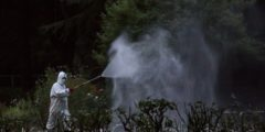 В южном Китае бьёт рекорды лихорадка денге