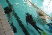 бассейн, Италия, плавание