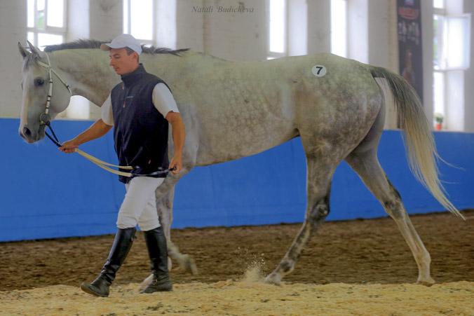 Аукцион лошадей возрождается в Краснодаре. Фото: Наталья Будычева