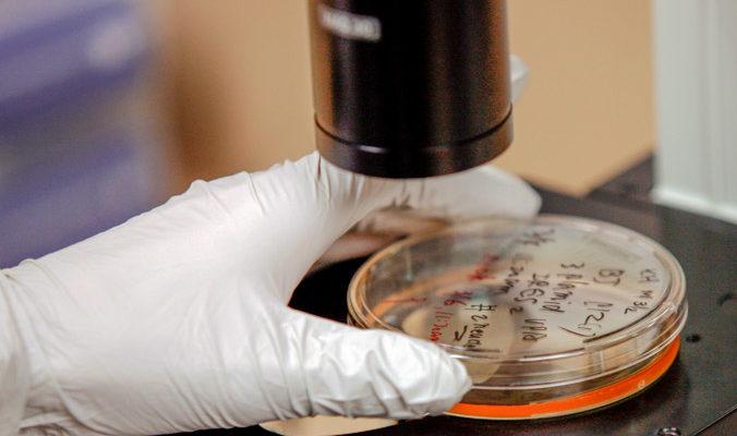 Учёные открыли секрет бессмертия
