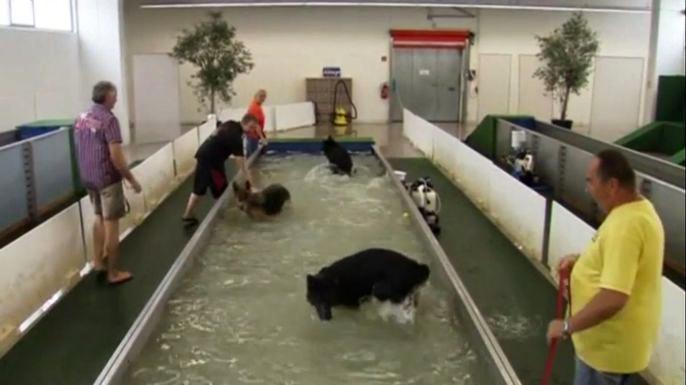 В Германии открыли первый бассейн для собак. Скриншот видео.