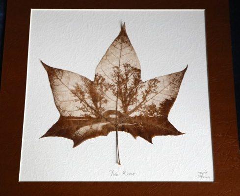 Дэниэл Ли ― художник, рисующий на листьях