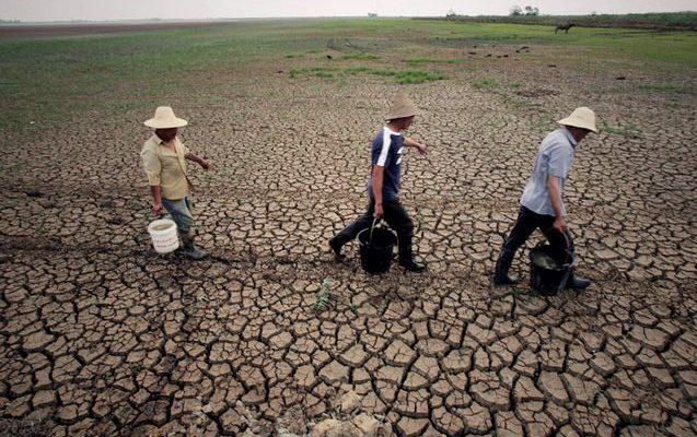 Засуха в Китае может стимулировать рост количества продуктов с ГМО