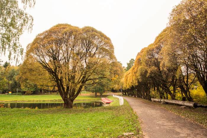 Осень в подмосковном Бекасово. Фото: Сергей Лучезарный/Великая Эпоха