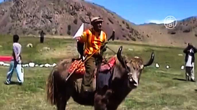 В Пакистане прошли соревнования по поло на яках