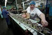 Рыба, рыбокомбинат, санкции
