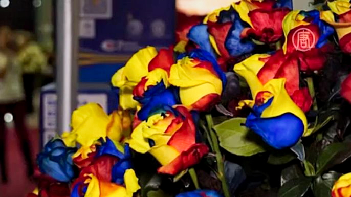 Трёхцветные розы показали на выставке в Эквадоре. Скриншот видео.