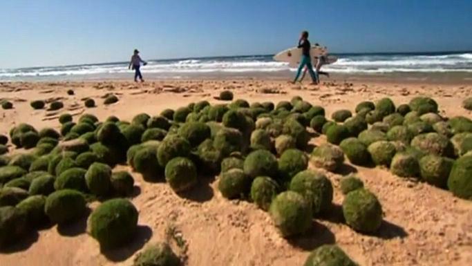 На австралийском пляже обнаружены загадочные зелёные шары