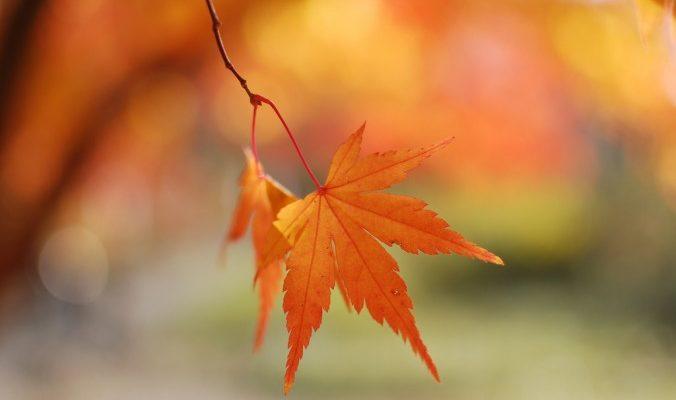 Осень ― время освобождения