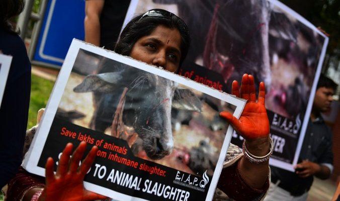 Индия вводит запрет на косметику, тестировавшуюся на животных