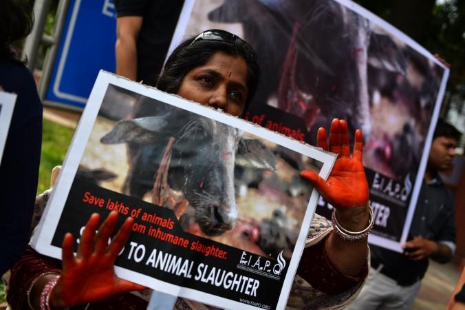 Индийская сторонница защиты животных держит плакат красными, будто в крови, руками. Это протест против ритуального жертвоприношения животных. Демонстранты выступают  против предстоящего жертвоприношения в храме Гадхимай, где во время индуистского ритуала в жертву приносят  500 000  животных. Фото: Chandan Khanna/AFP/Getty Images