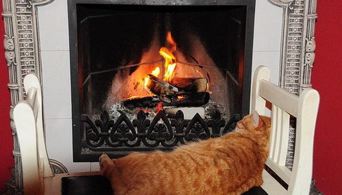 Юрмальский кот