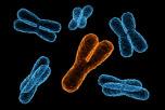 Учёные: Y-хромосома влияет на риск смерти у мужчин. Фото: kathyturner1/flickr.com