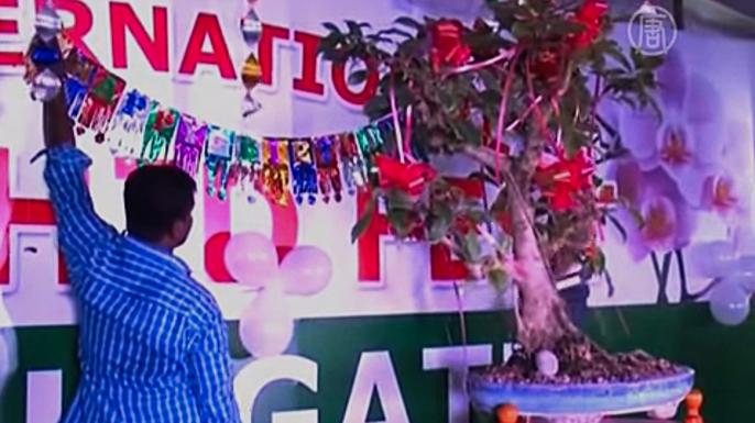 Любители бонсай Индии собрались на 50-летнем юбилее дерева