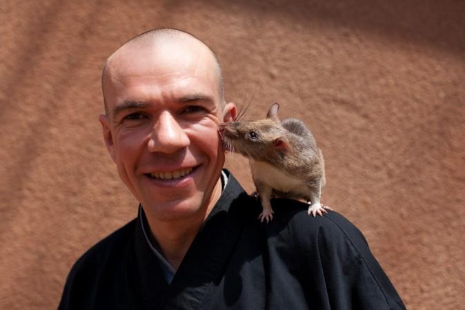 африканская крыса