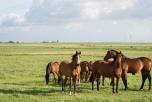 наука, Индия, появление предков лошадей