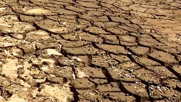 От нехватки воды уже страдают около 14 миллионов человек. Скриншот видео.