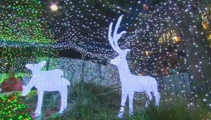 В Канберре представили самую большую в мире рождественскую инсталляцию