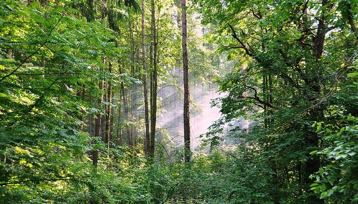 Чудеса леса